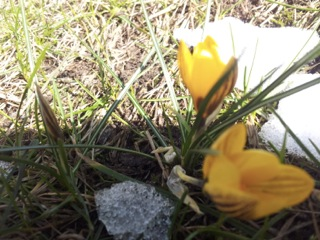 Willkommen, lieber Frühling