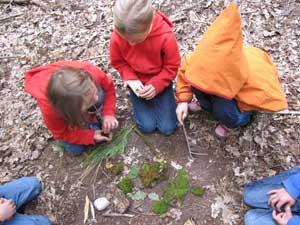 Wir schnitzten, stellten ein Kräuterbalsam her, bauten ein Waldsofa, beobachteten Wildschweine, horchten einem Mistkäfer beim Summen zu, bestimmten Bäume und Wildkräuter und hörten ein Waldmärchen.